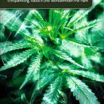 Leben mit Cannabis