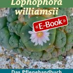 Peyote - Lophophora williamsii (E-Book)
